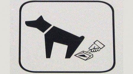 Интинцев обяжут убирать за своими собаками